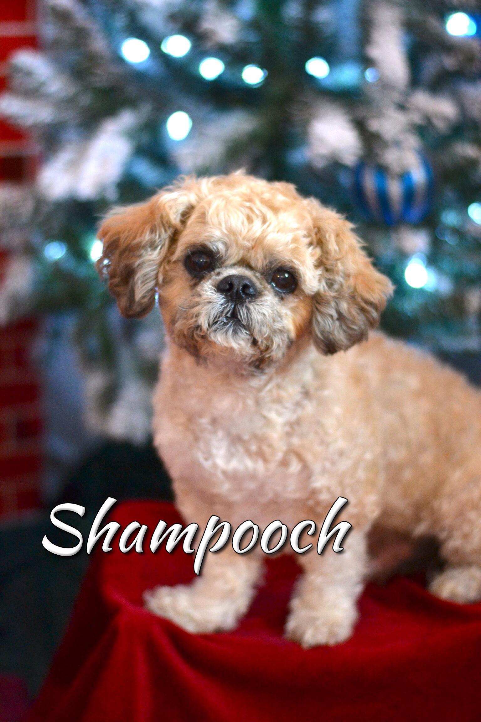Shampooch Grooming Salon