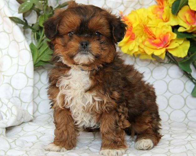 FREE Quality A.k.i.t.a Puppies:contact us at (614) 398-0887
