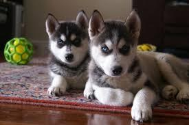 fresh puppies