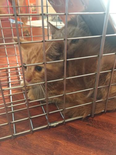 5 Kittens Need a New Home