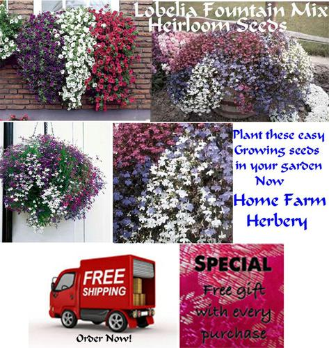 FREE gift & free shipping when you Order Lobelia Fountain Mix Heirloom Seeds for your garden Now!