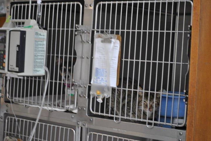 Animal Hospital Of North Myrtle Beach, P.A.