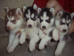 I Have Four Beautiful Puppies