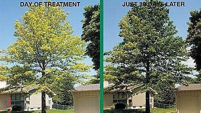 Green Again Tree Treatment