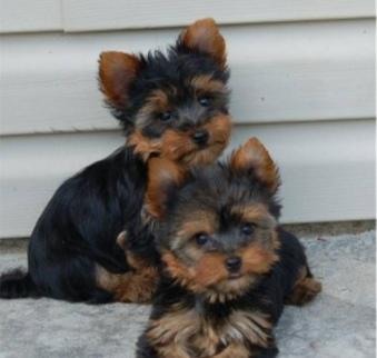Healthy and lovely male and female ready for good homes../please serious inquiries only.,