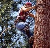 Treeman INC