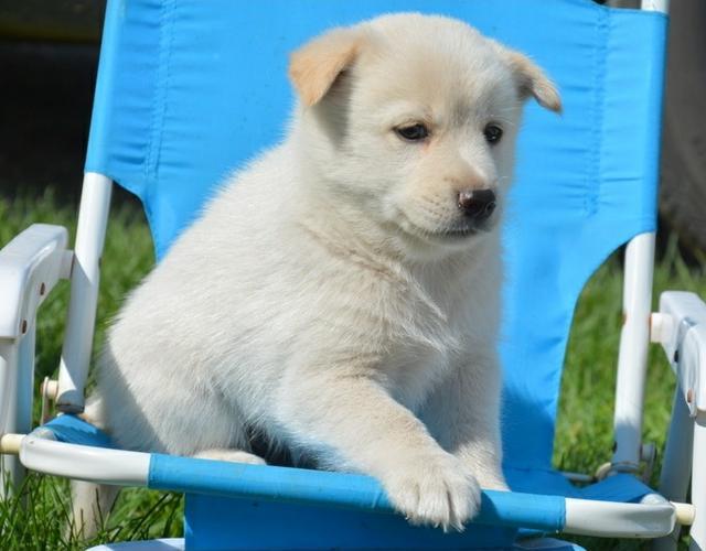X.MASS We have beautiful and cute p.o.m.s.k.y Puppie.s(707) 983-7420