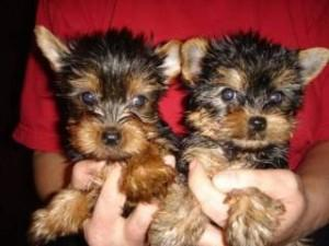 Both males and females puppies.