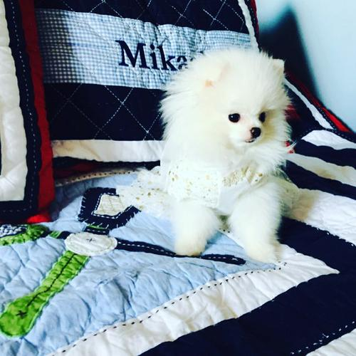 !!Male and Female Pomeranianss Puppies Available (920) 710-1469