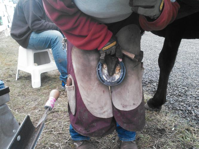 Certified Journeyman Farrier