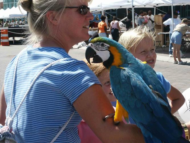 ( Macaw parrot) Just for your home Christmas present