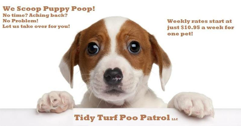 Tidy Turf Poo Patrol
