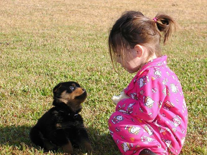 German Rottweiler Puppies!
