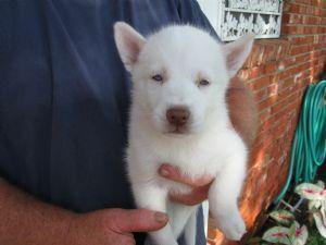 !#Fine fabulous puppies@#