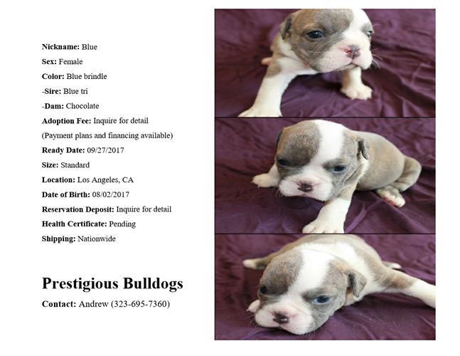 English Bulldog Puppies Craigslist Los Angeles - Puppy And ...