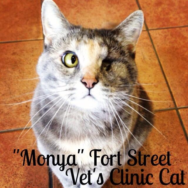 Fort Street Veterinarian