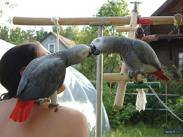 parrots for free adoption
