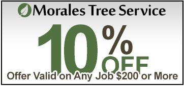 Morales Tree Service