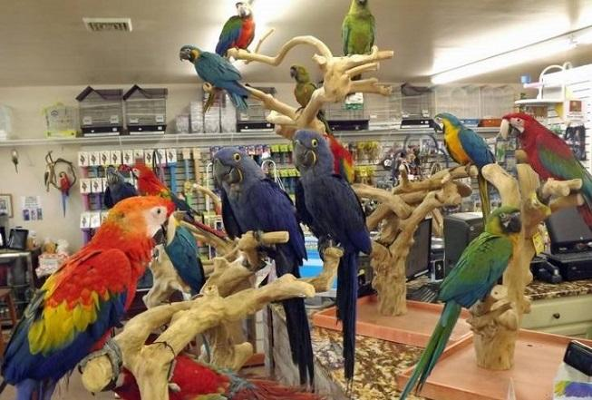 Macaw parrots birds and parrot eggs available