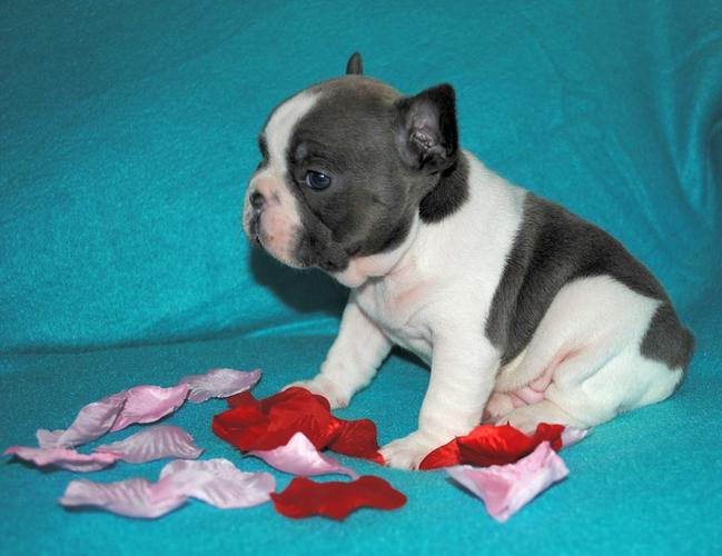 Both male and female puppies Only letting go due to major life changes