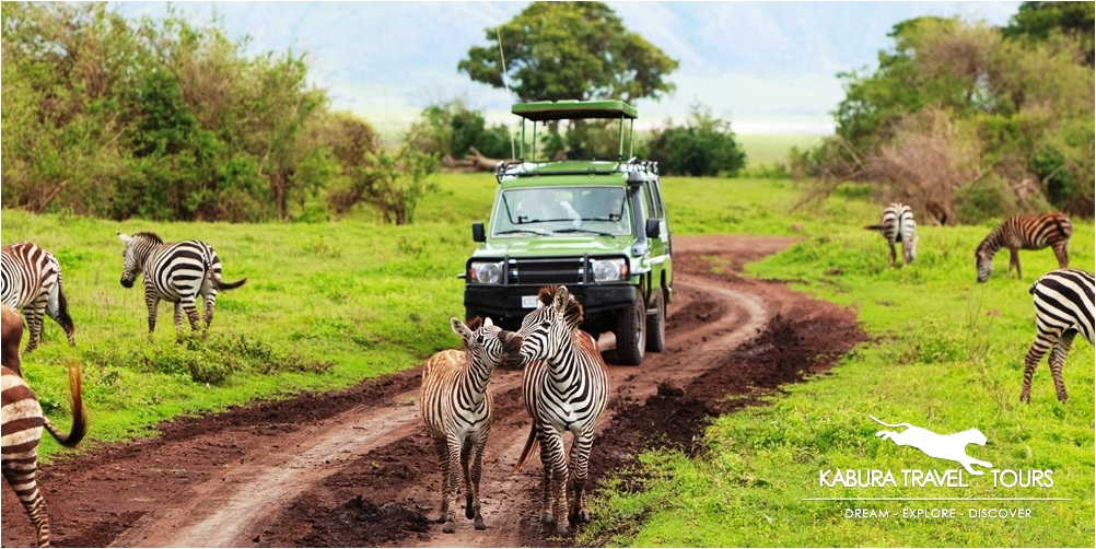 Discover the best things to do in Cape Town   Cape Town & Garden Route Private Tours Guide