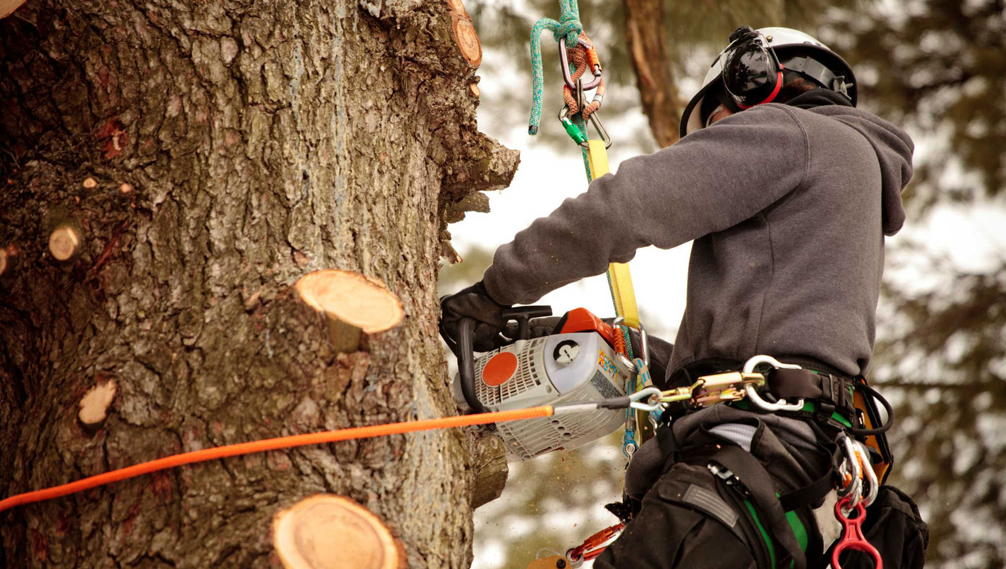 Monkey Tree Service