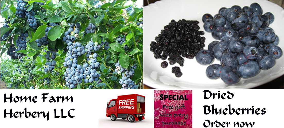 Delicious Sun Dried Blueberries, Order now, Healthy, free shipping in USA & a free gift