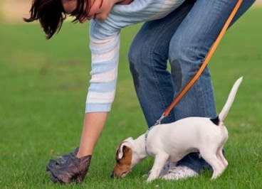 Get The Best Pet Waste Removal Rates At Ecoscoopers
