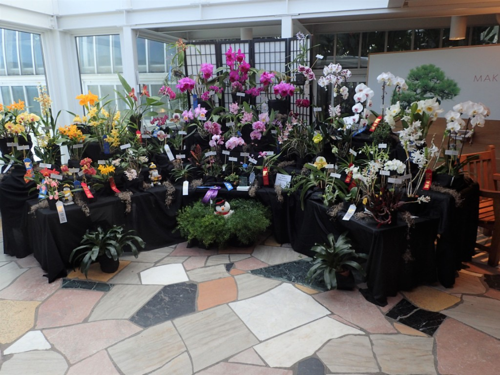 Sixth Eastern Iowa Orchid Show and Sale: Orchids Are a Scream!