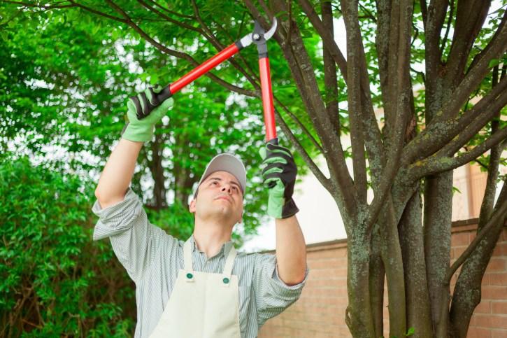William Tree Service in Katy