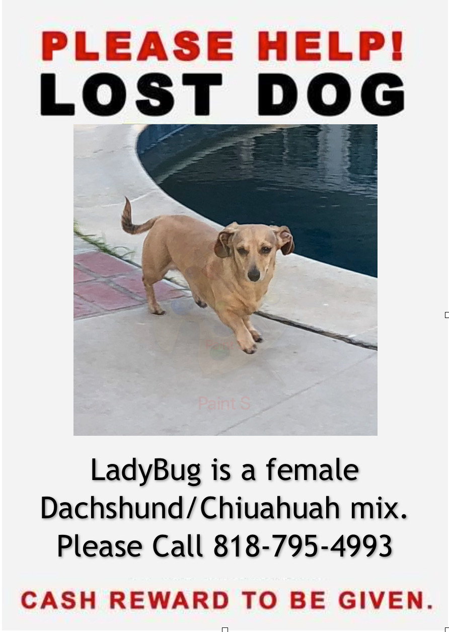 LOST DOG PLEASE HELP