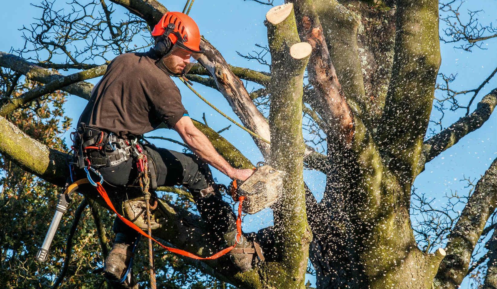 OB Tree Removal