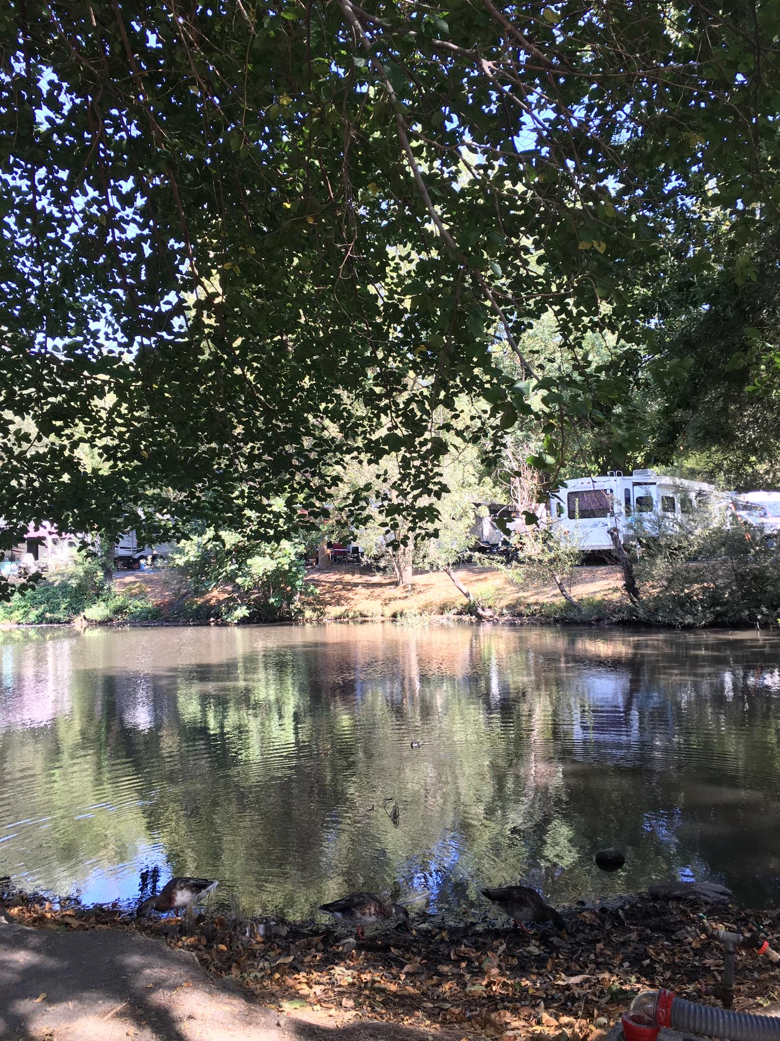 pennysaver | membership at mountain lakes resort in lytle creek