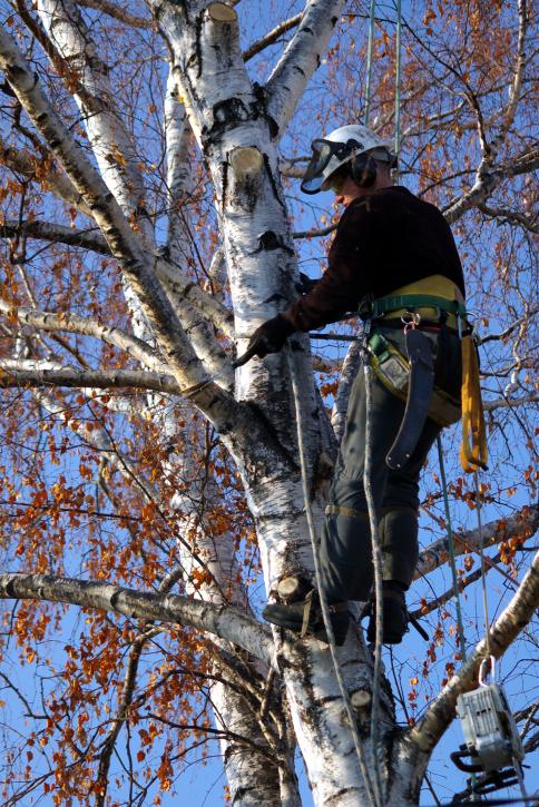 A & A Tree Service