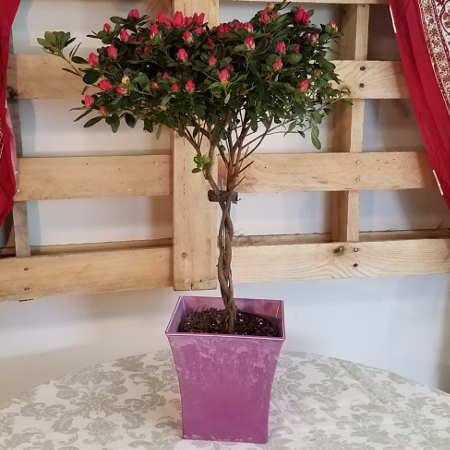 Soddy Daisy Florist - Florist Soddy Daisy
