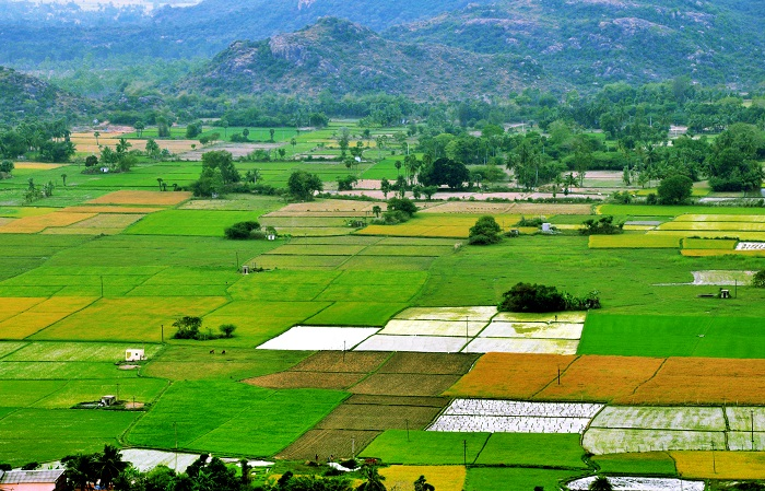 Buy farm land for investment near Bangalore