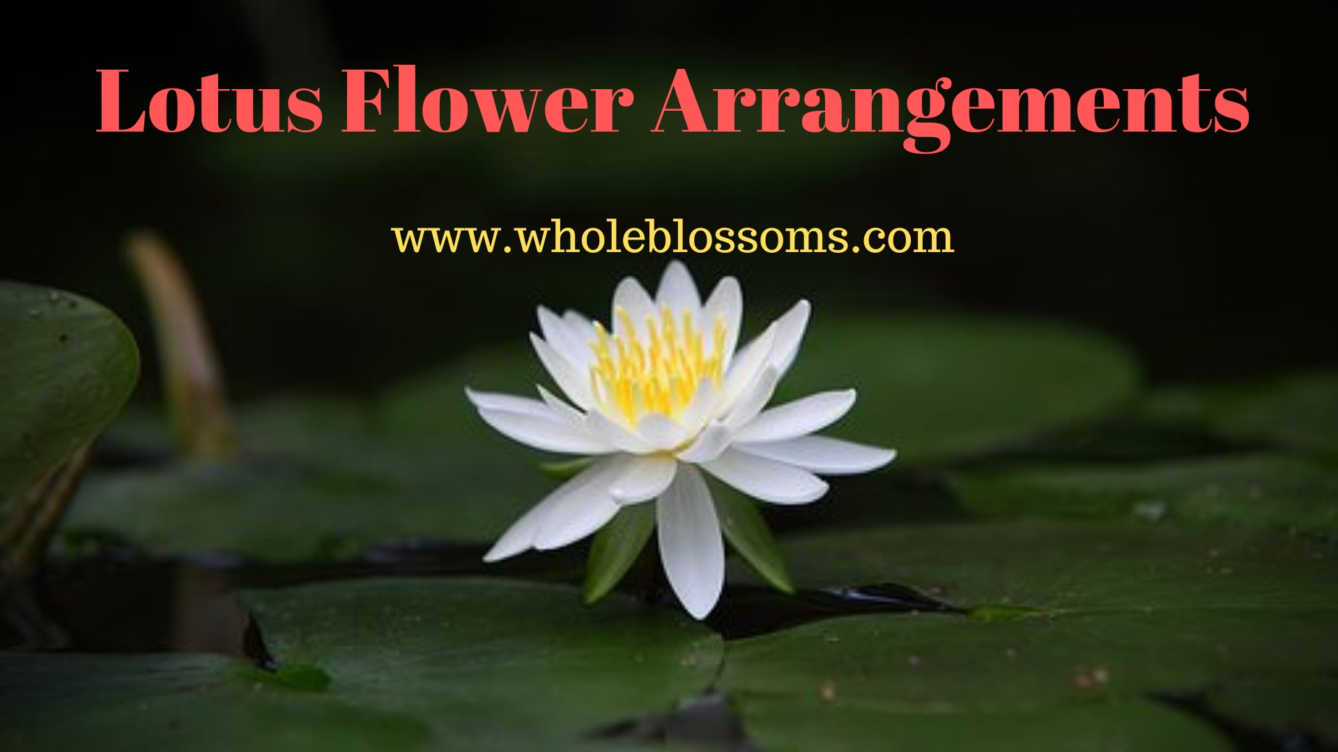 Purchase Gorgeous & Fresh Lotus Flowers for Sale