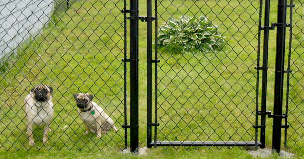 No1fence - Coated Chainlink Fence