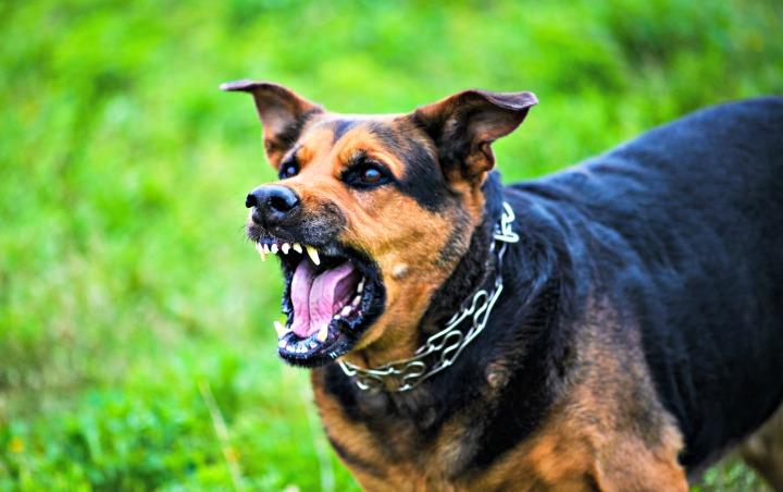 Dog Bite Injury Attorney Fresno
