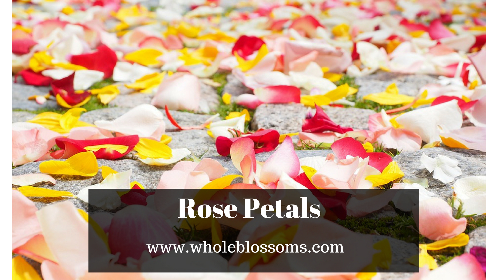 Order Beautiful Rose Petals from Whole Blossoms