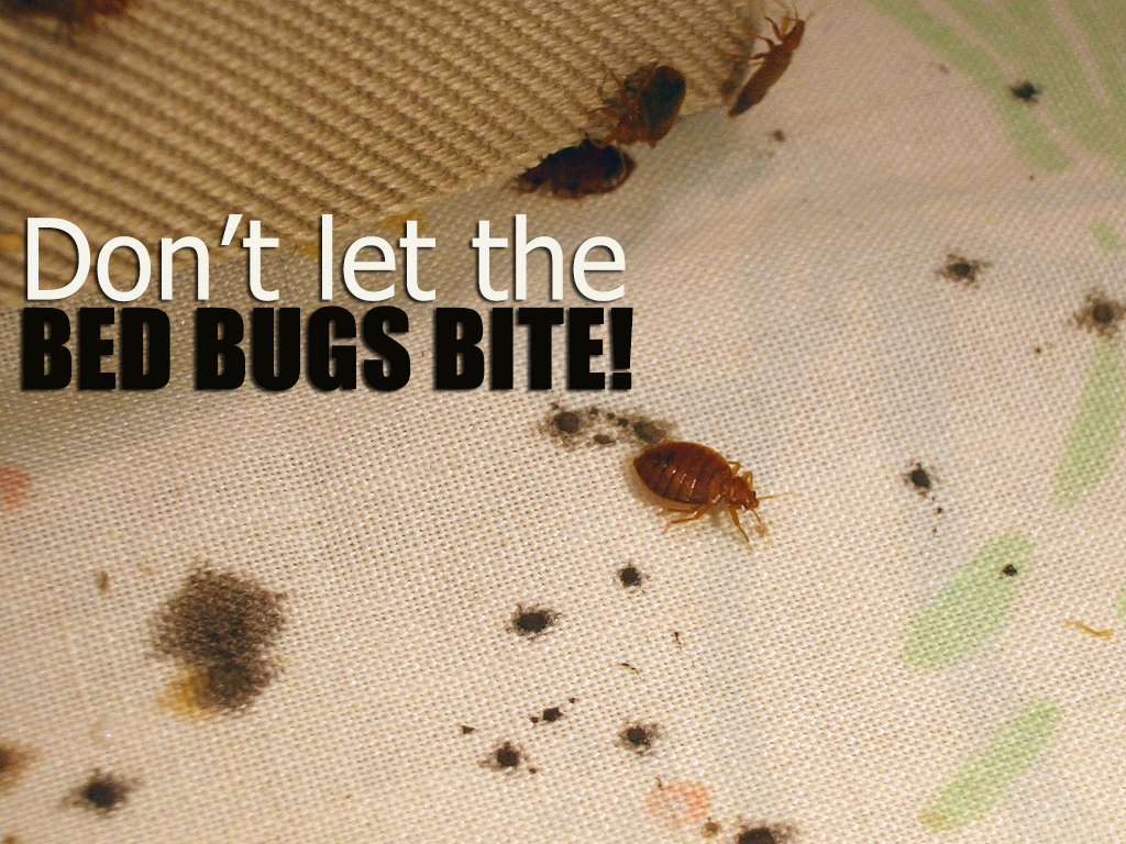 Pro bed bug removal and beyond 247