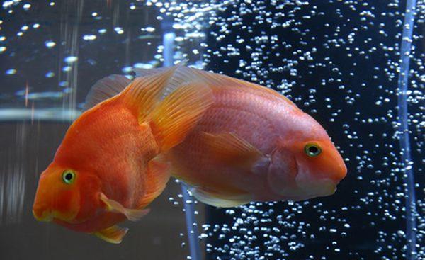 Wholesale Aquarium supplies | Aquarium products