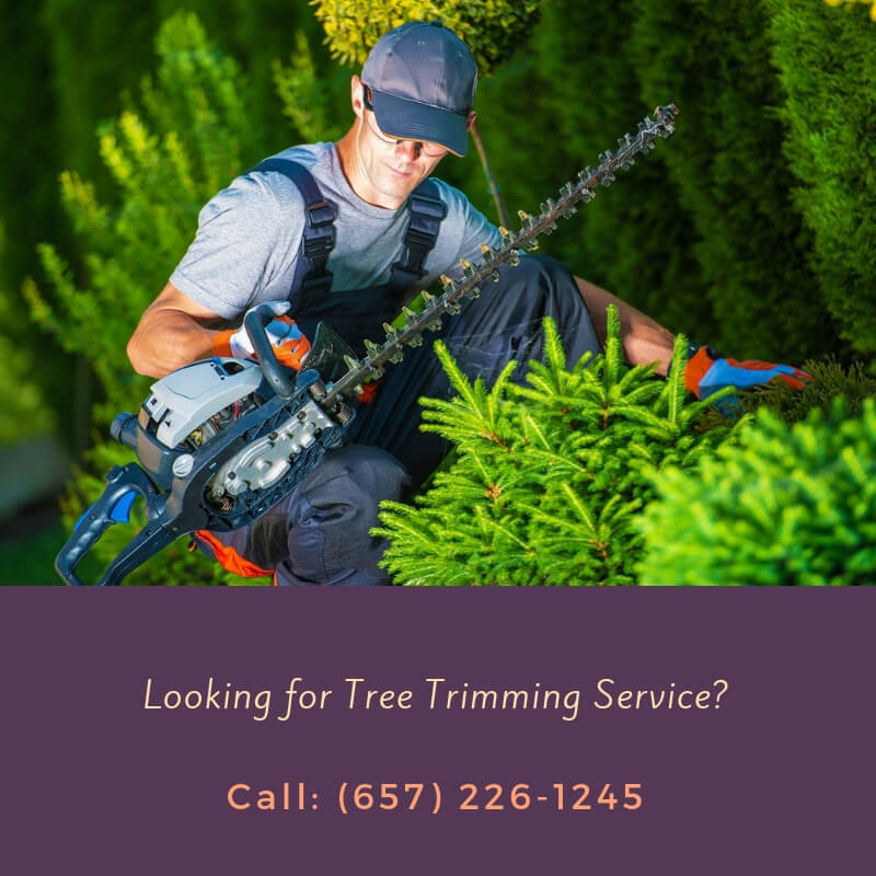 Tree Trimming Orange CA