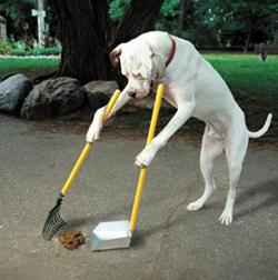 Get The Best Dog Poop Scooper Service By Ecoscooper