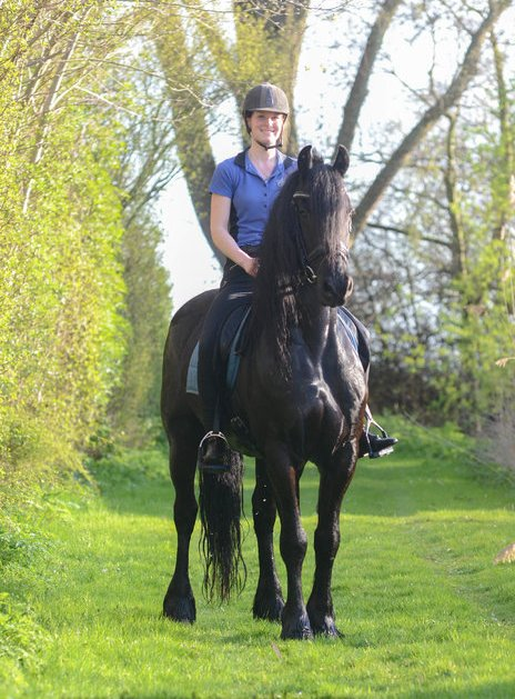 PennySaver | Friesian Stallion ready to Join new Family in Harris