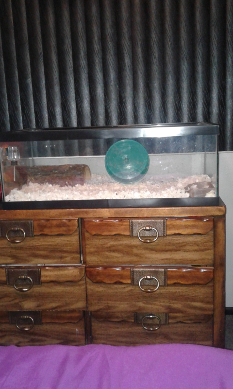 Two Female Rats and Tank