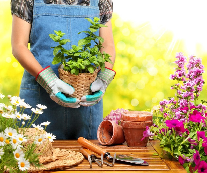 Supply of indoor and outdoor plants in landscaping