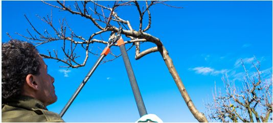 Tree Removal Services | savannahtreeservicepros.com