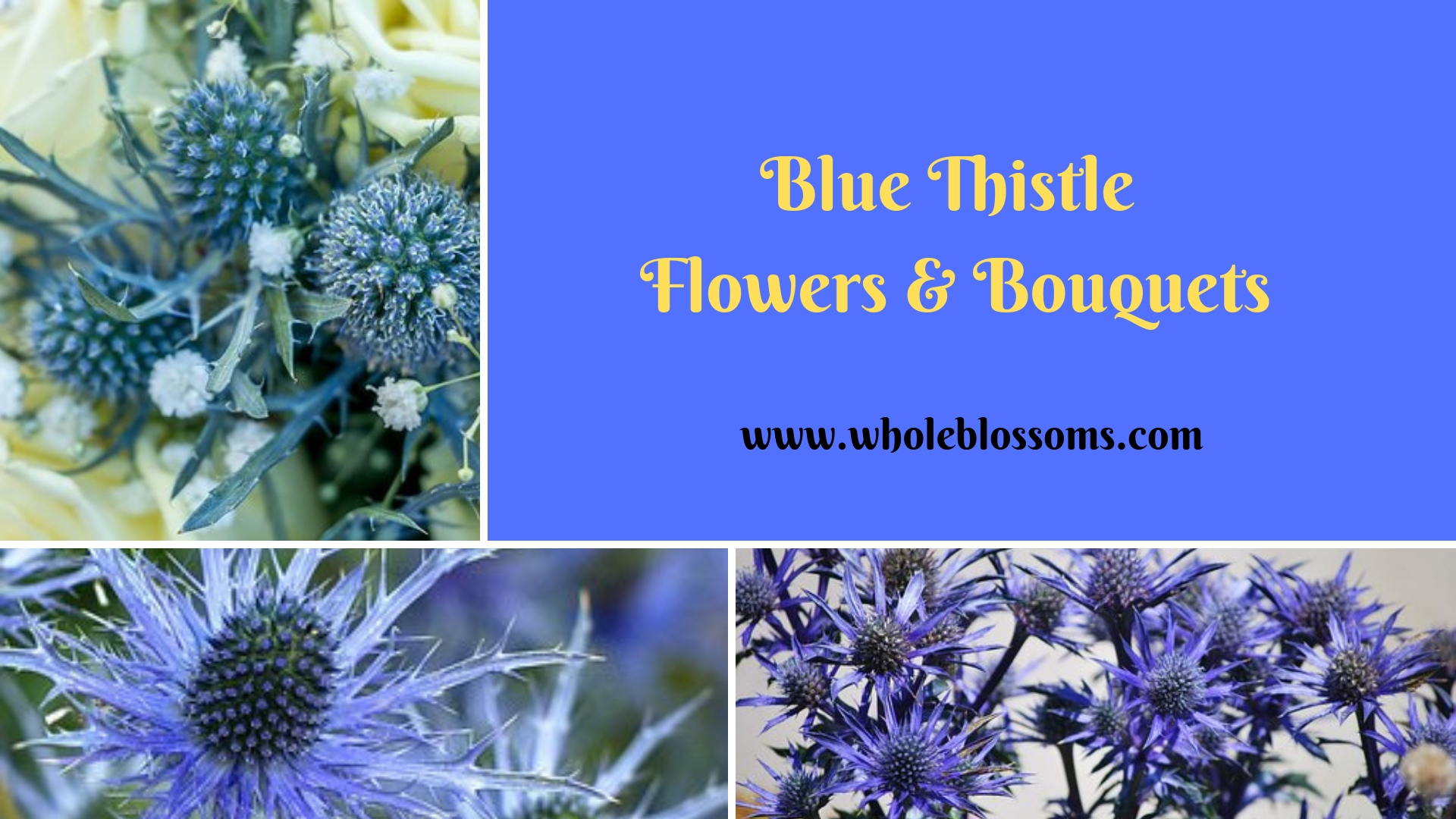 Order Blue Thistle Flowers and Bouquets from Whole Blossoms