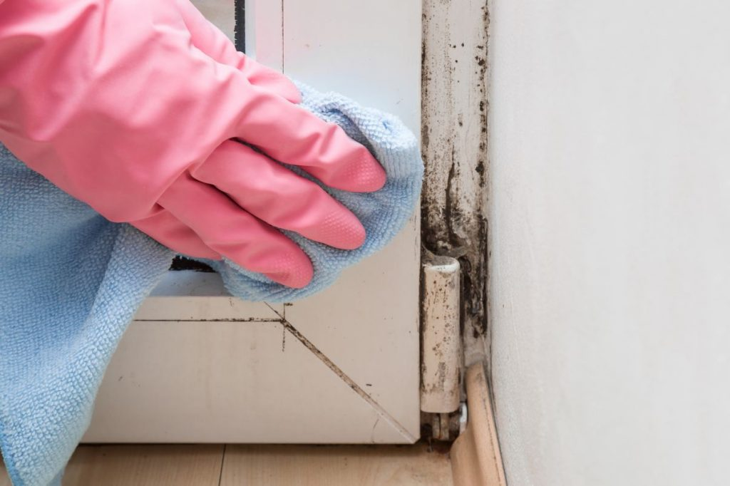 Mowatt Mold Removal LLC